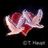 Lichtbild Tauben mit Herz