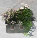 Zinkkoffer Bepflanzt