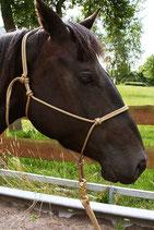 Knotenhalfter der Seilerei Brockamp Profi-Trainerqualität Grösse: Pony in diversen Farben