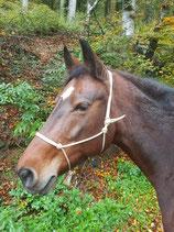 Knotenhalfter von Balanced Horseman Shop in diversen Farben, Grösse: Shetty (XS)