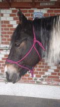 Knotenloses Halfter von Balanced Horseman Shop in diversen Farben, Grösse: Shetty (XS)
