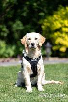 Harnais pour chien 'Tactical'