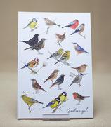 Grußkarte Gartenvögel