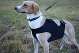Dragrattan Hunde-Shirt