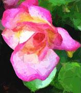 Bestellformular Blumenbilder 410 - 473