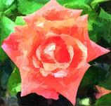 Bestellformular Blumenbilder 474 - 496