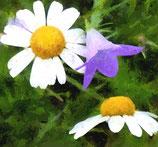 Bestellformular Blumenbilder 169 - 192