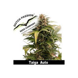 Auto Taiga - Dutch Passion