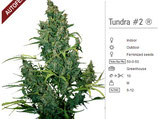Auto Tundra#2 - Dutch Passion
