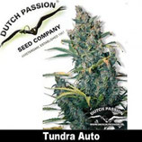 Auto Tundra - Dutch Passion