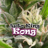 AUTO KING KONG - DR UNDERGROUND