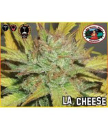 BIG BUDDHA SEEDS - LA CHEESE