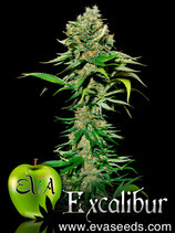 EVA SEEDS - EXCALIBUR