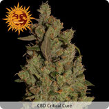 BARNEYS - CBD CRITICAL CURE