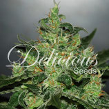 DELICIOUS SEEDS Auto - CRITICAL JACK HERER AUTO