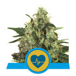 ROYAL QUEEN SEEDS - MEDICAL MASS
