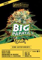BIG PAPAYA - feat. Gast