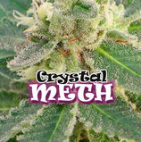 CRYSTAL METH - DR UNDERGROUND