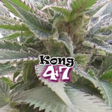 KONG 47 - DR UNDERGROUND