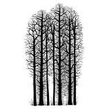 Forest Scene - Lavinia Stamps