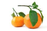 Blatt Clementinen (1 kg)