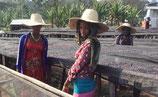 エチオピア シェカ G-1 カヨカミノ農園 ナチュラル
