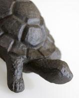 Schildkröte Gerry