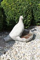 Taube Vogelbad