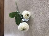 Bellis (Gänseblümchen) in weiß 2-blütig