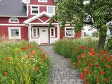 Feldblumenmischung (100g)