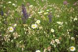 Blumenwiese ohne Gräser (100g)