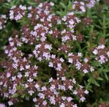 Thymian Duftkissen (Thymus vulgaris)