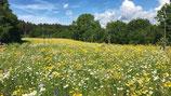 Blumenwiese mit Gräsern (100g)