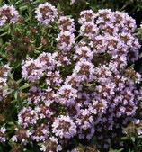 Echter Thymian (Thymus vulgaris Duftkissen)