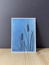 Postkarte Schilf