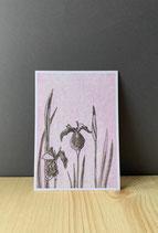 Postkarte Iris