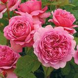 Rose Princess Alexandra of Kent