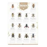 Bienen Poster