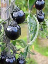 Salattomate 'Indigo Rose' (Bio-Saatgut, DE-ÖKO-039)