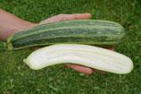 Zucchini 'Cocozelle di Tripolis' (Bio-Saatgut, DE-ÖKO-039)