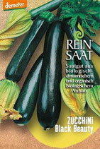 Zucchini 'Black Beauty' (Bio-Saatgut, AT-BIO-301)