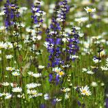 Samenmischung 'Wildblumenwiese' (Bio-Saatgut, CH-BIO-006) - 250 Gramm