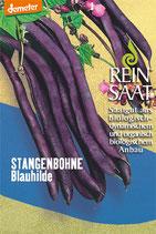 Stangenbohne 'Blauhilde' (Bio-Saatgut, AT-BIO-301)