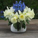 Narcissus 'W.P. Milner' (vor 1869) -  Trompeten-Narzisse (Blumenzwiebeln)