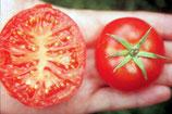 Fleischtomate 'Silbertanne' (Bio-Saatgut)