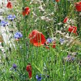 Wildblumenmischung 'Ackerwildkräuter' (Bio-Saatgut, AT-BIO-301)
