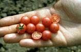 Wildtomate 'Rote Murmel' (Bio-Saatgut, DE-ÖKO-039)