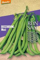 Buschbohne 'Maxi' (Bio-Saatgut, AT-BIO-301)