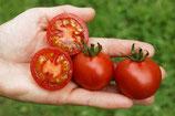 Salattomate 'Vivaroma' (Bio-Saatgut, DE-ÖKO-039)
