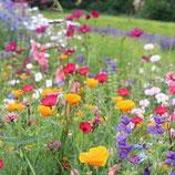 Sommerblumenmischung 'Feenwiese' (Bio-Saatgut, AT-BIO-301)